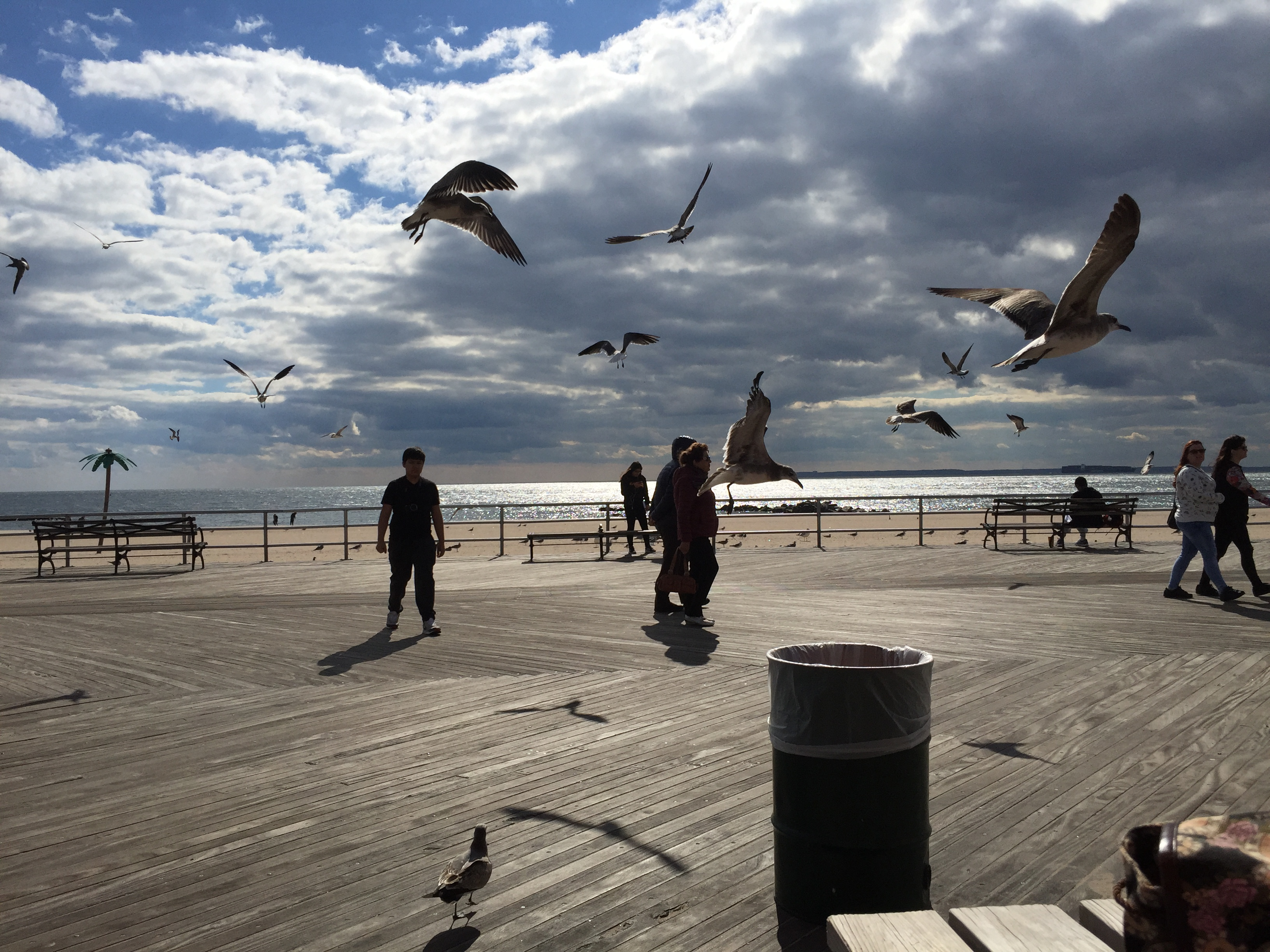 Gulls on the Boardwalk.jpg