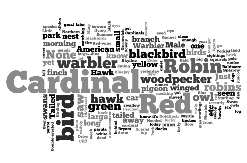 bird_wordle.png